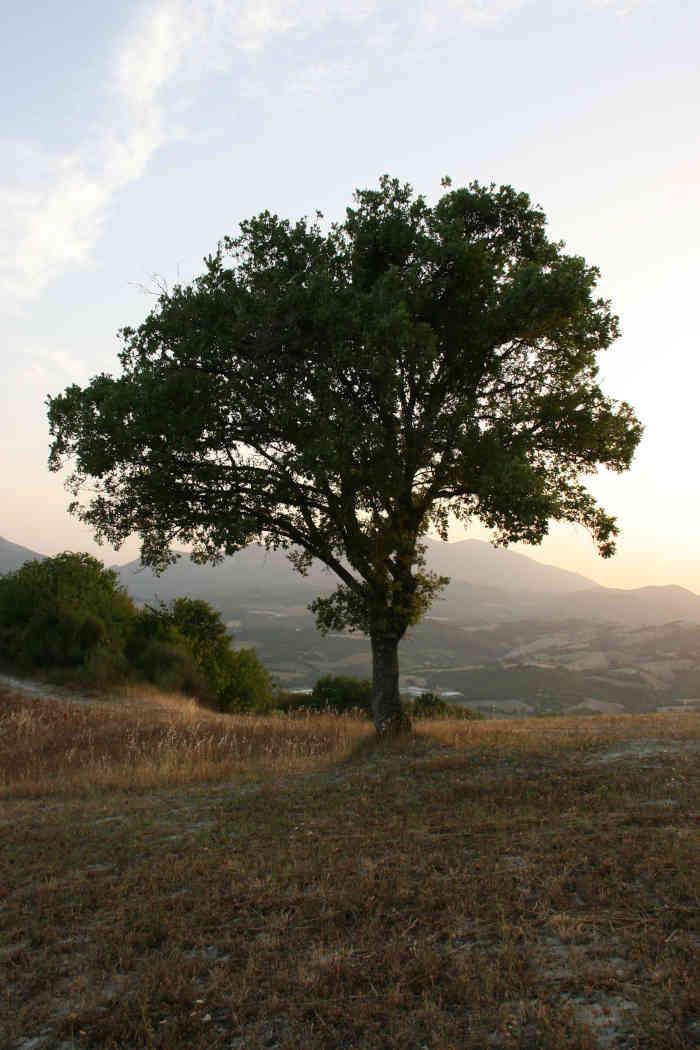 Boom bij zonsondergang Agriturismo Vellaneta Cagli de Marken